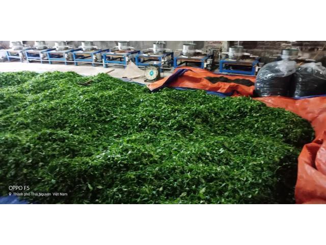 Trà Thái Nguyên sạch 100%
